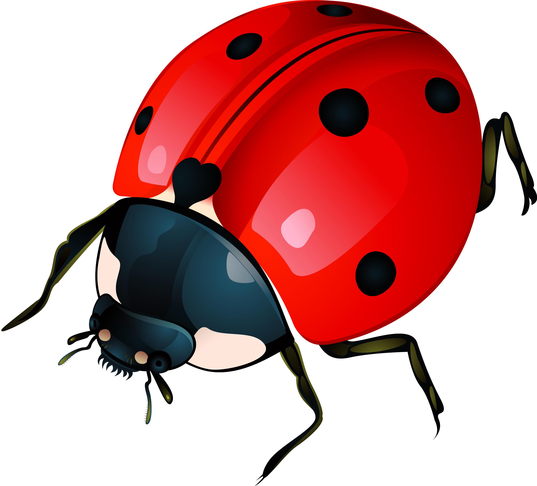 2627x2376 Ladybug Clipart Gambar