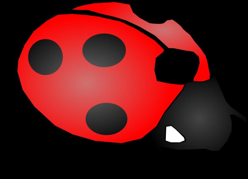 800x577 Ladybug Clipart Transparent