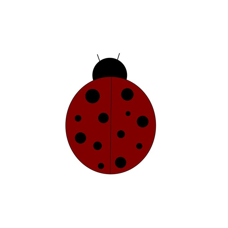 736x736 73 Best Ladybugs Images Lady Bug, Pictures And Eyes