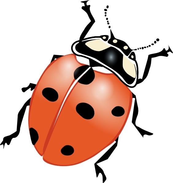 564x596 Ladybug Clipart Orange