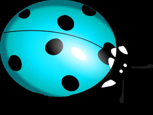600x454 Ladybug Clipart Teal