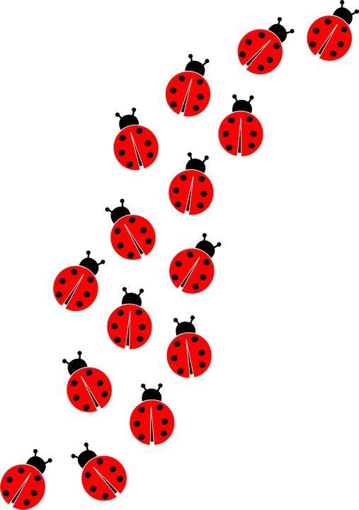 507x720 Ladybug Wallpaper Cliparts