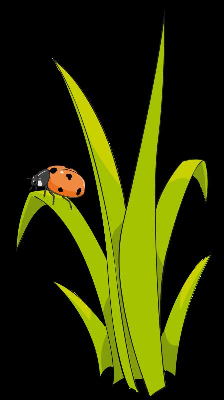 448x800 Ladybug Clipart Grass Flower