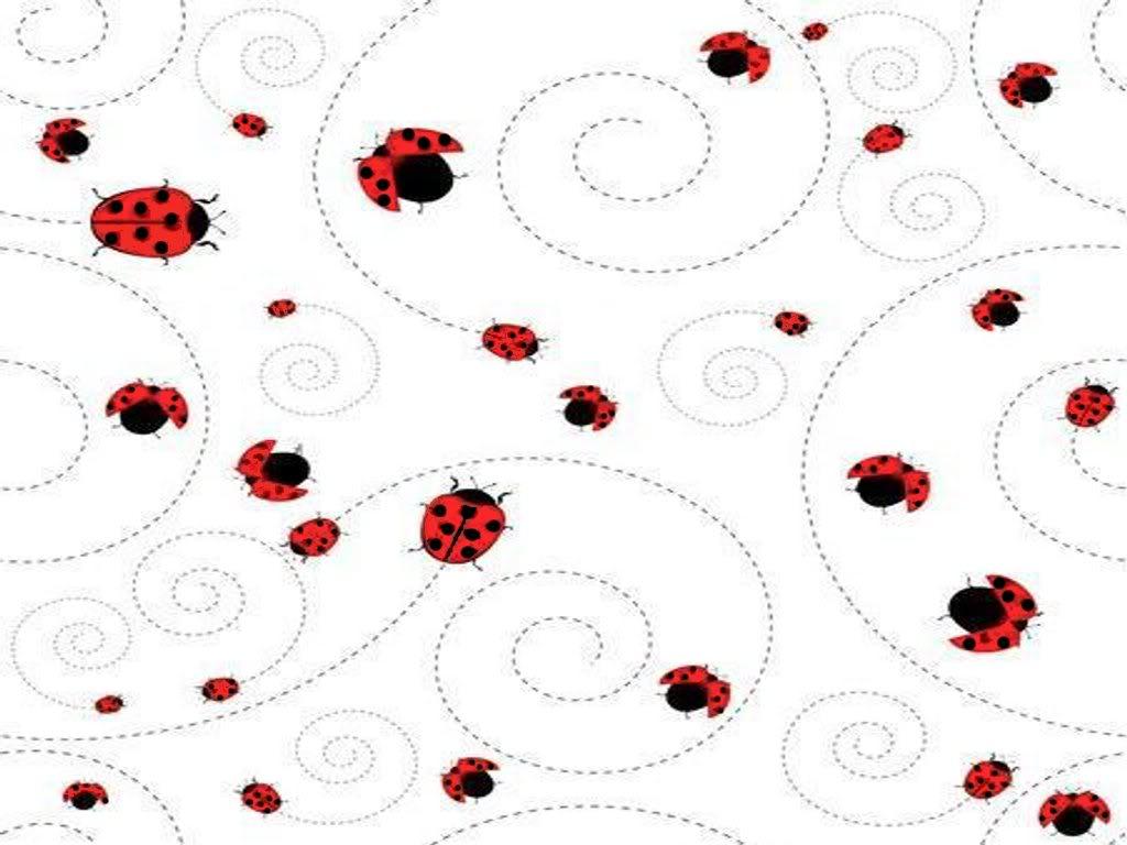 1024x768 Ladybug Background Pictures Ladybug Request Myspace Layouts 2.0