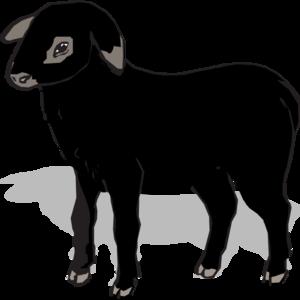 300x300 Black Lamb Clip Art
