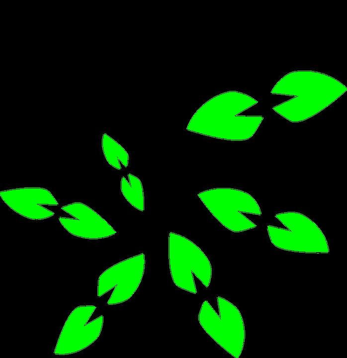 698x720 Vine Clipart Climber Plant