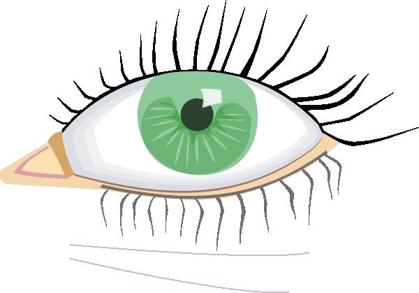600x419 Eye Clip Art