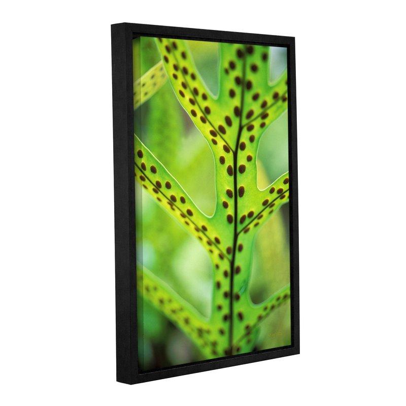 800x800 Artwall Hawaiian Laua'E Fern By Kathy Yates Framed Photographic
