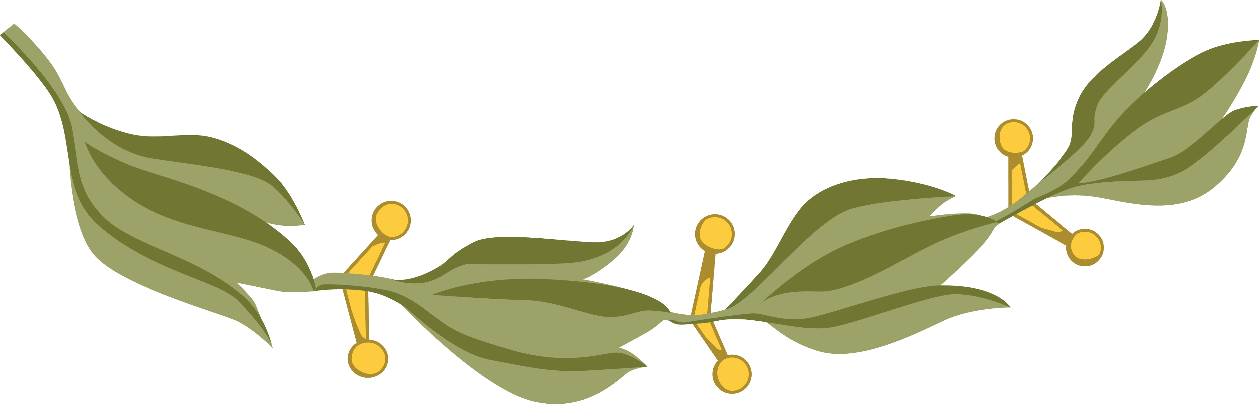 4000x1285 Clipart Of A Design Element Of Laurel Leaves