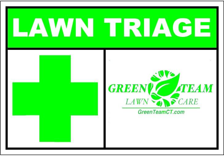 728x507 Lawn Triage Green Team Ct Lawn Care Services. Mowing, Seeding