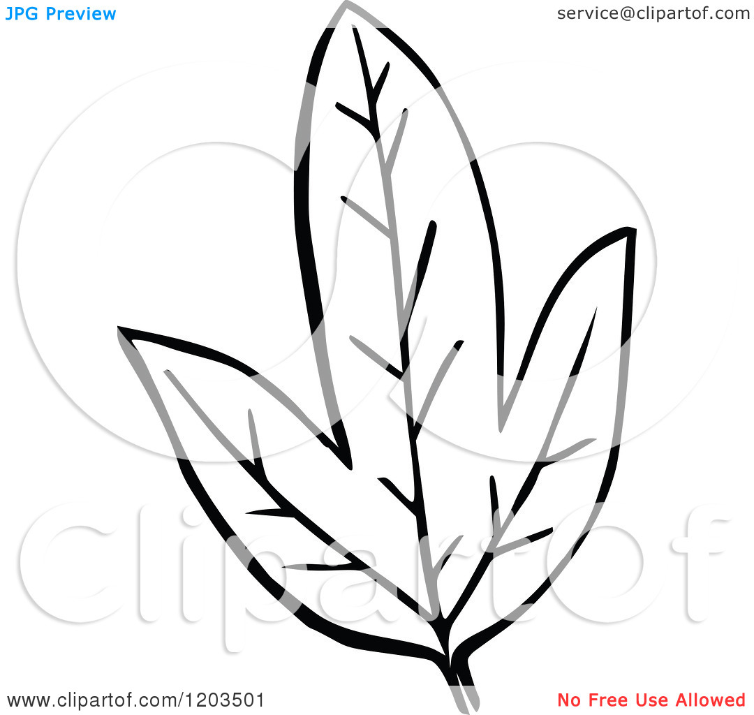 1080x1024 Leaf Black And White Clipart