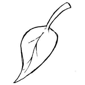 300x300 Leaves Black And White Fall Leaf Clipart Black And White Free 3