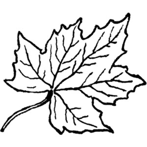 300x300 Leaves Black And White Maple Leaf Clipart Black And White