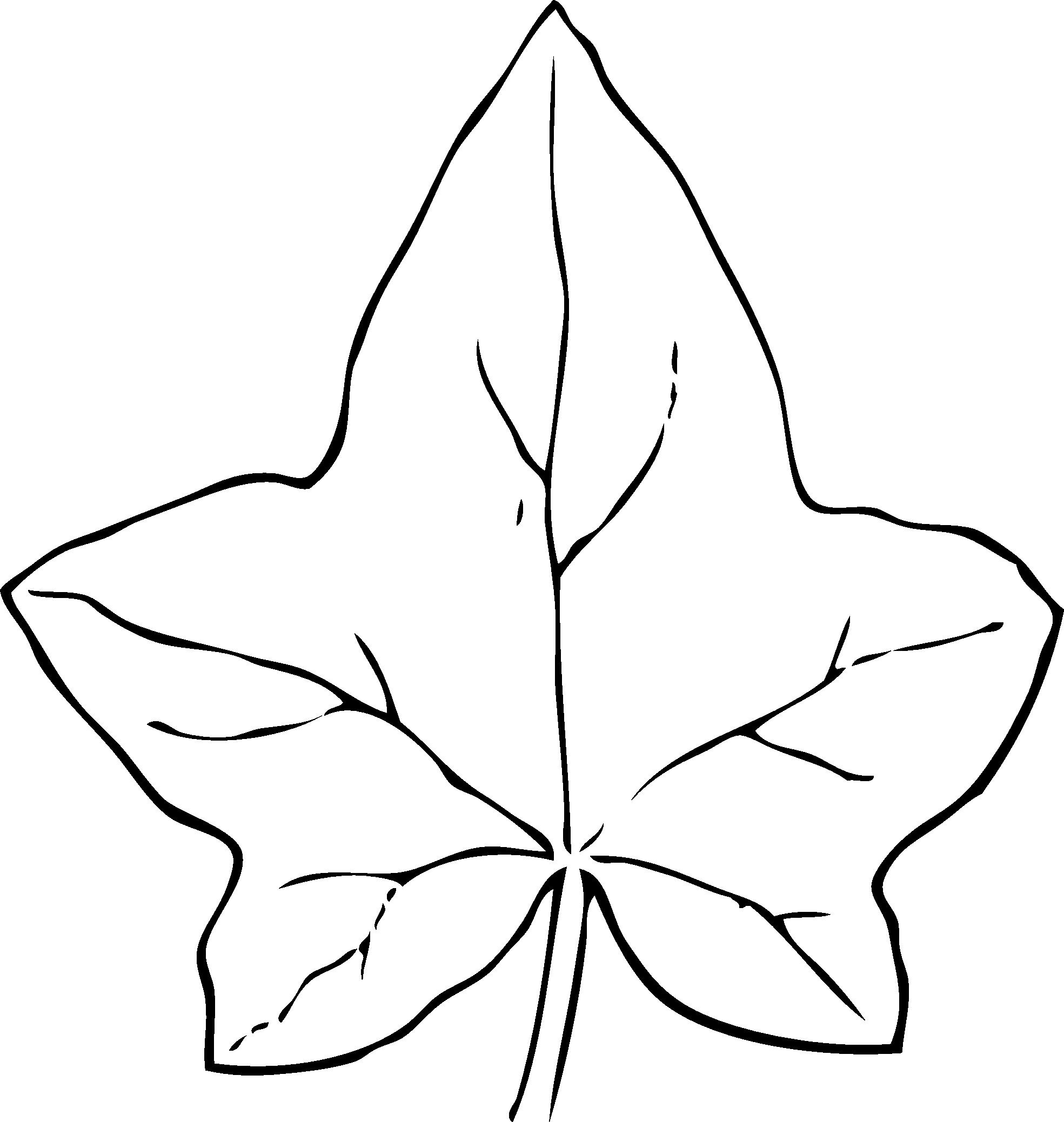 1969x2077 Ivy Leaf 2 Black White Clipart Panda