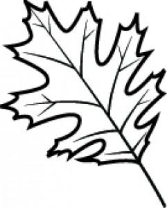 241x300 Black White Oak Leaf