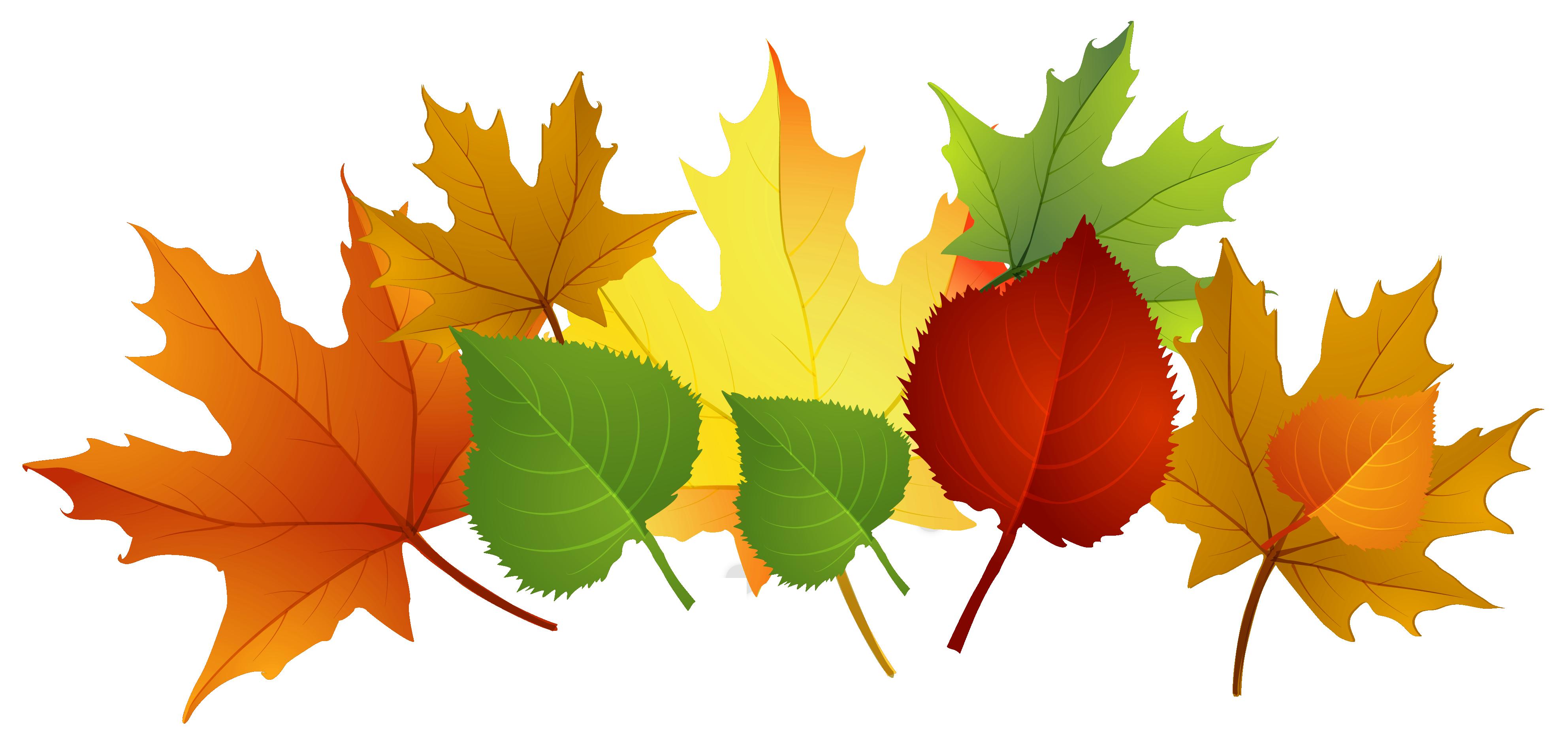 3969x1910 Fall Leaves Clip Art Free