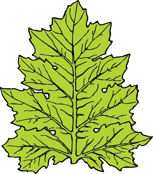 Leaf Cartoon Clipart