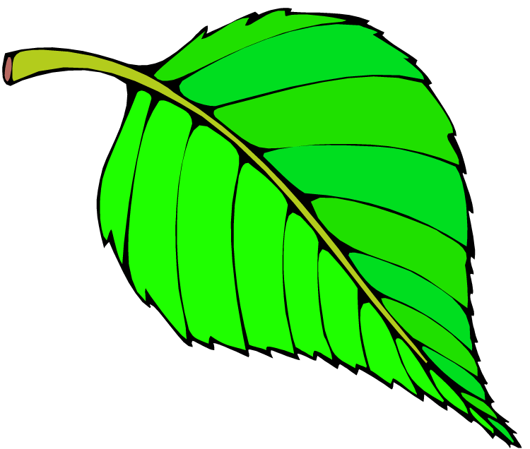 750x636 Leaf Clipart Colorful Leave