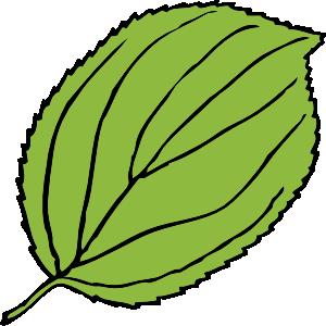 300x300 Serrate Leaf Clip Art