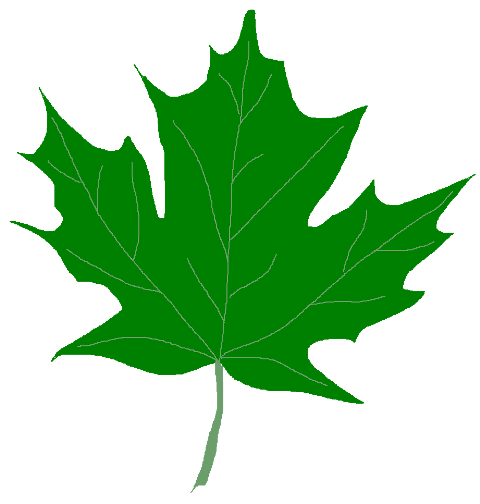 480x504 Green Maple Leaf Clipart Kid 2