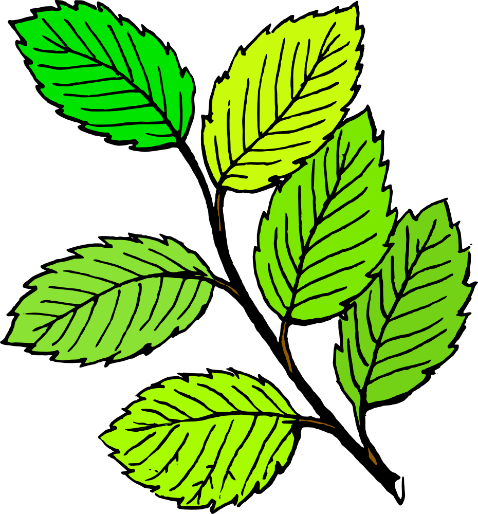 930x1000 Leaf Clipart Spring Leaves