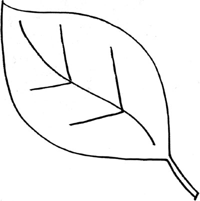 400x402 Leaves Black And White Leaf Outline Clip Art Black And White