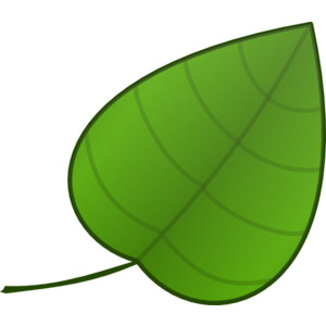 300x300 Ever Green Leaf Clip Art Clipart Panda