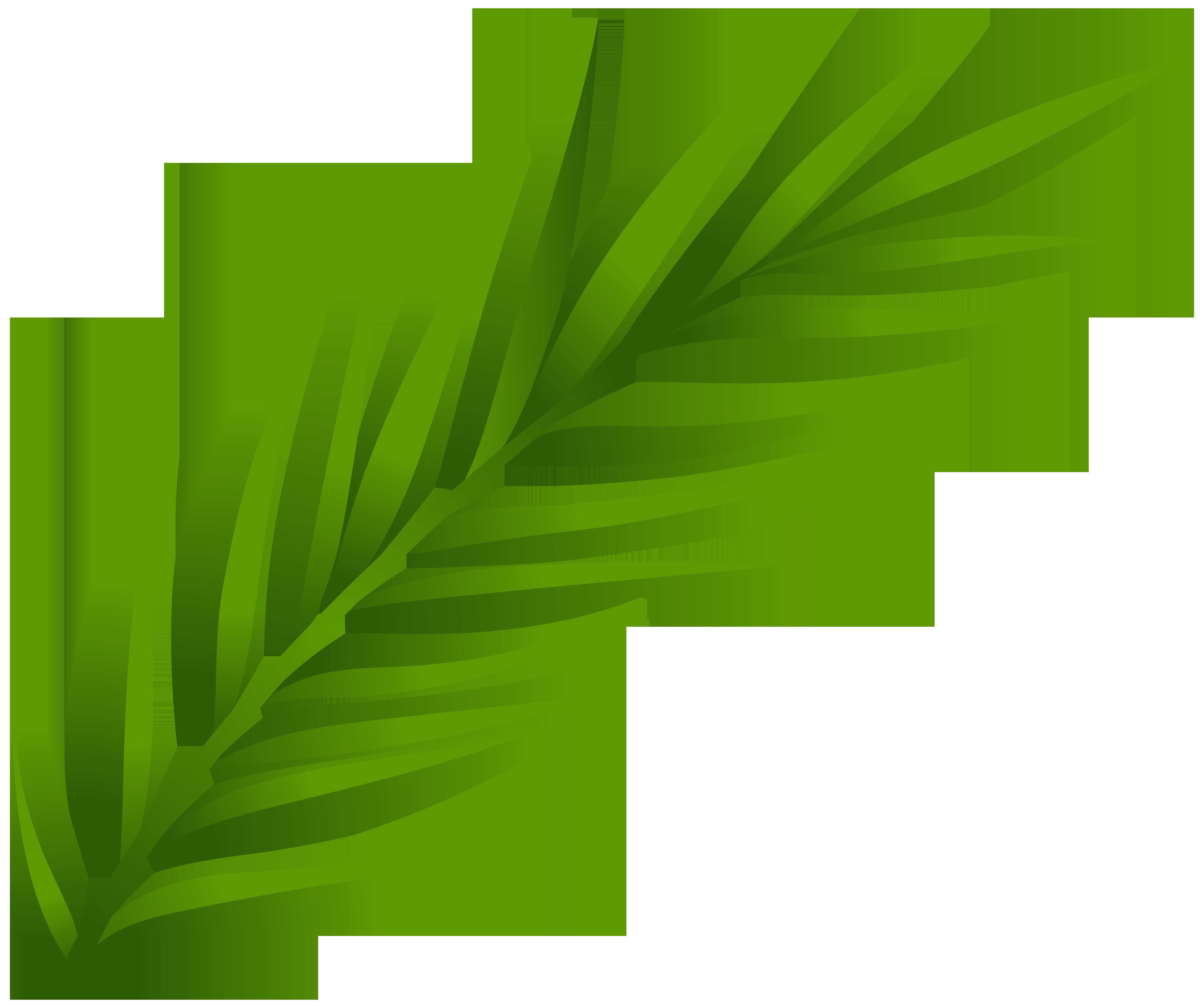 8000x6702 Leaf PNG Clip Art