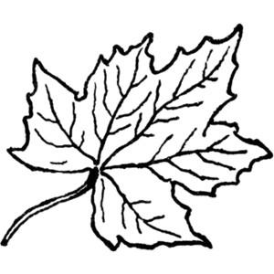 300x300 Leaf Black And White Leaves Black And White Leaf Clipart Free