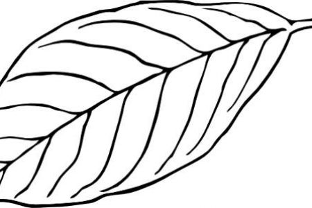 450x300 Black And White Leaf Clip Art Corner