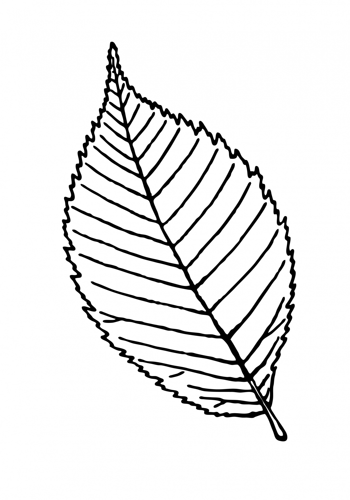 1344x1920 Leaf Outline Clipart Leaf Template