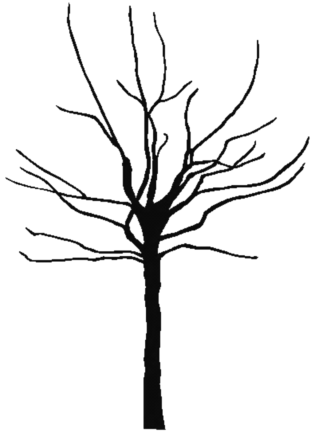 1080x1488 Tree Black And White Black Tree Outline Free Download Clip Art