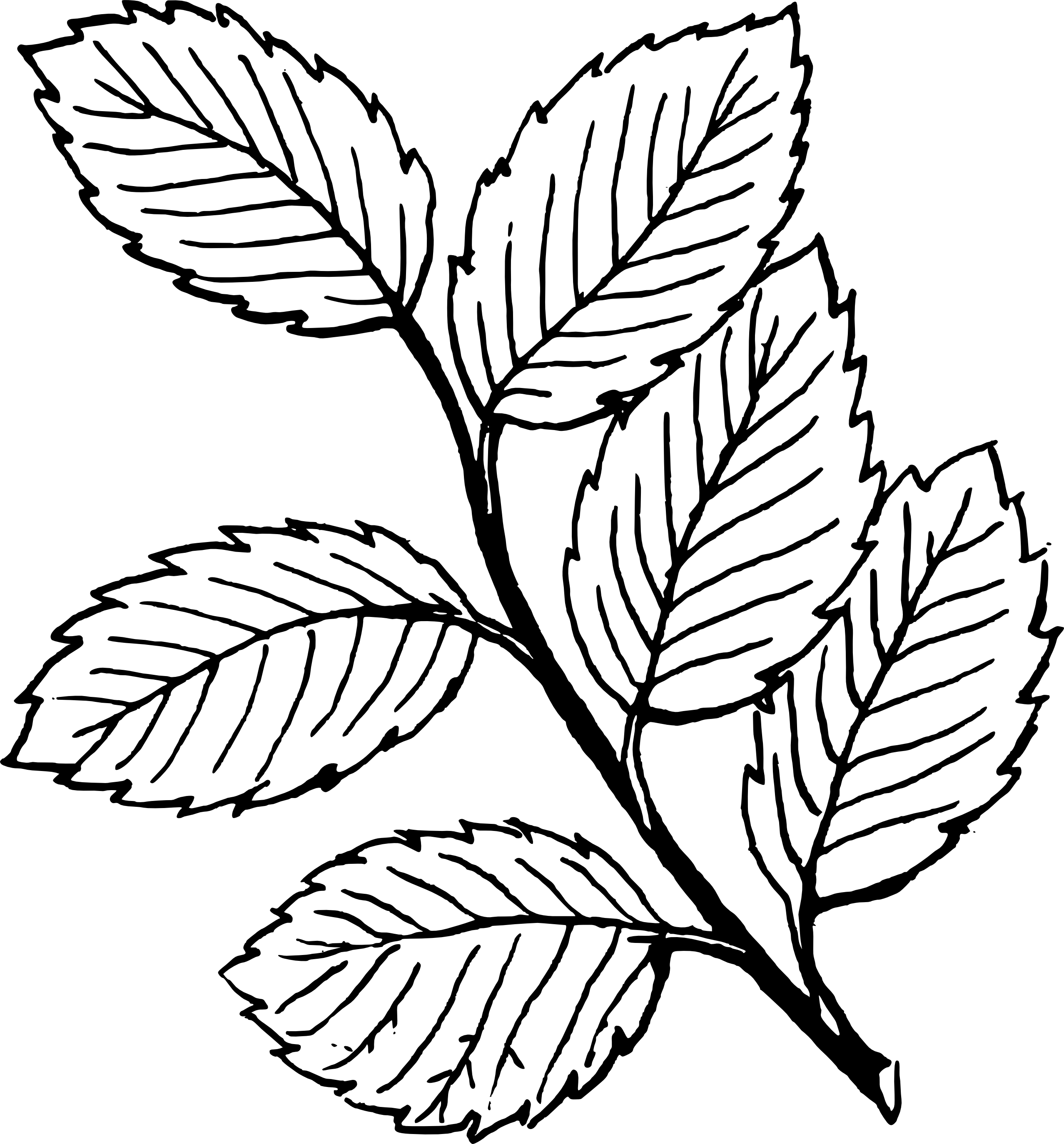 2555x2748 Fall Black And White Fall Leaf Clipart Black And White Free 2