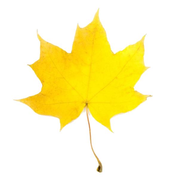 600x600 Fall Leaves Clip Art Beautiful Autumn Clipart Image 5