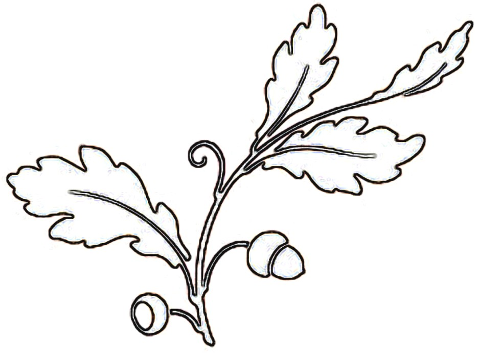 937x693 Oak Leaf Coloring Page Image Clipart Images