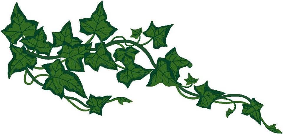960x454 Ivy Leaf Border Clipart