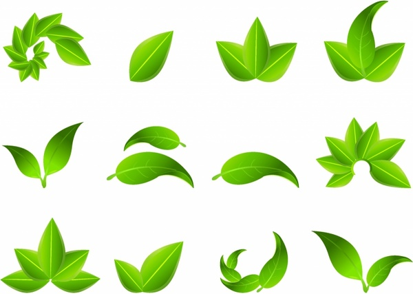 600x427 Leaf Graphics Collection