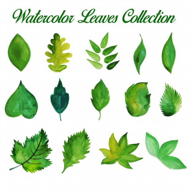 626x626 Watercolor Leaves Vectors, Photos And Psd Files Free Download