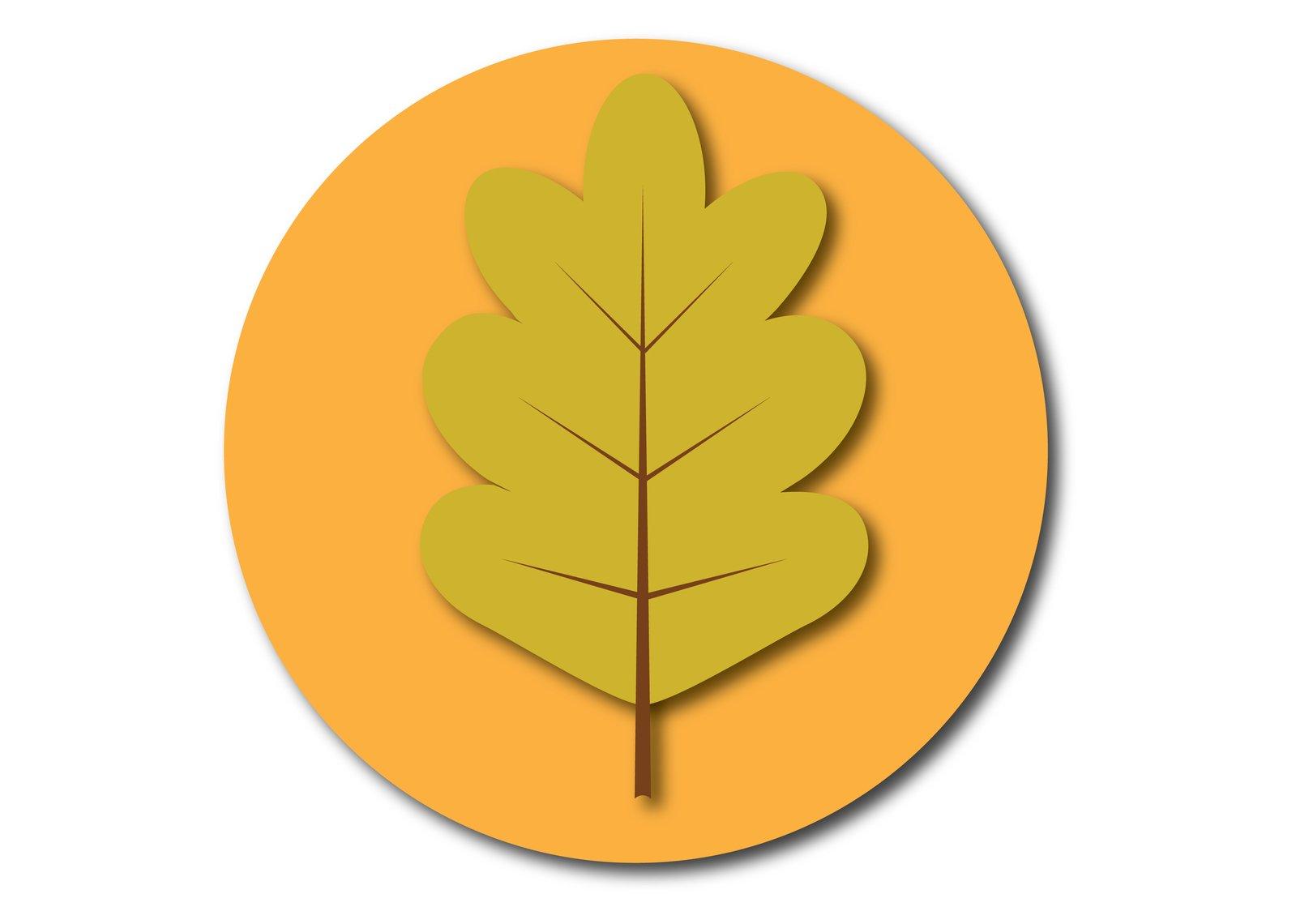 1599x1140 Free Oak Leaf Stock Photo