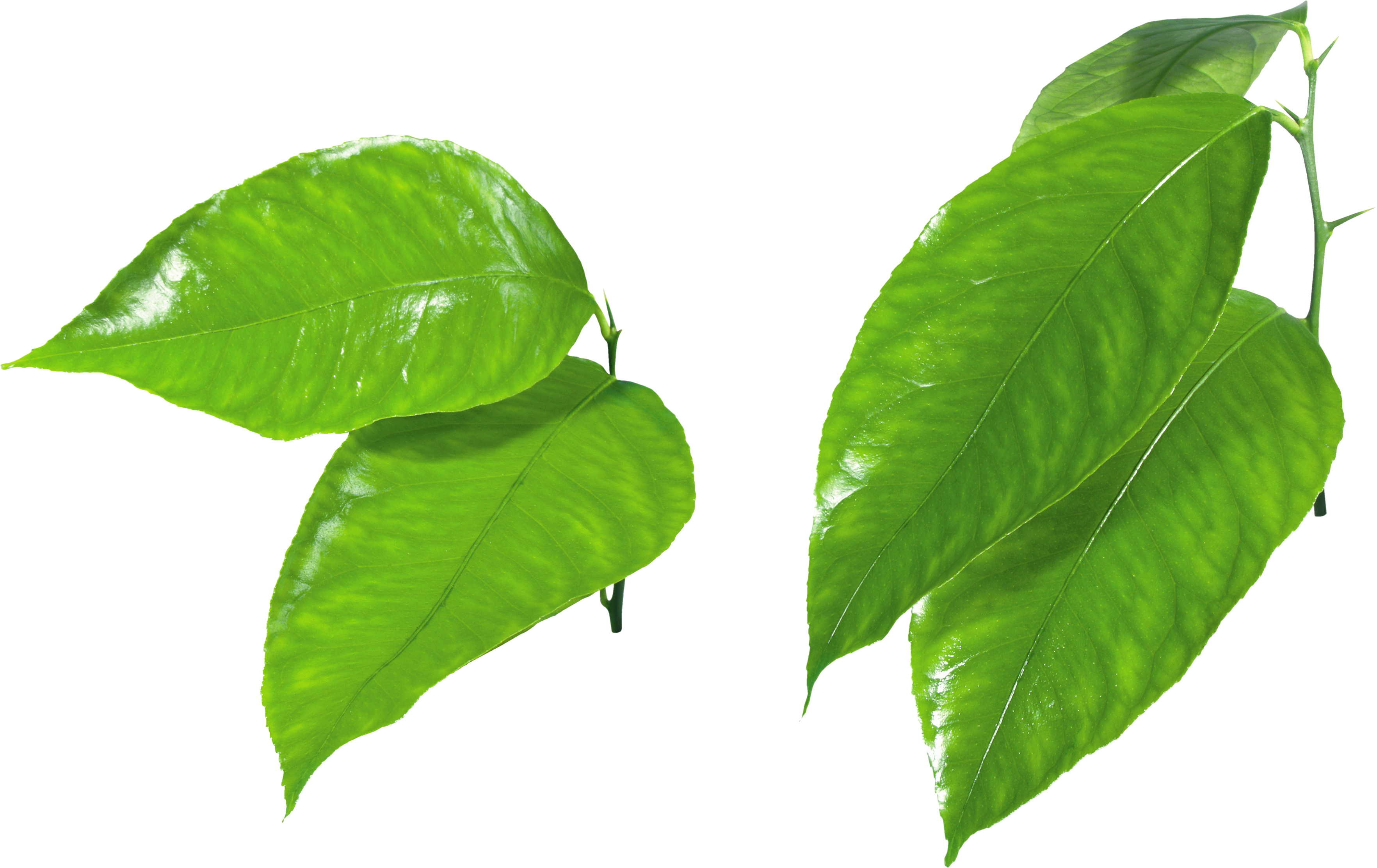 3528x2225 Green Leaves Png