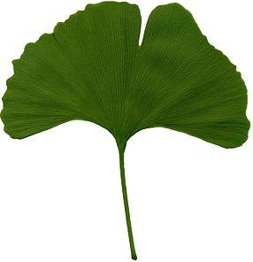 286x296 Leaf