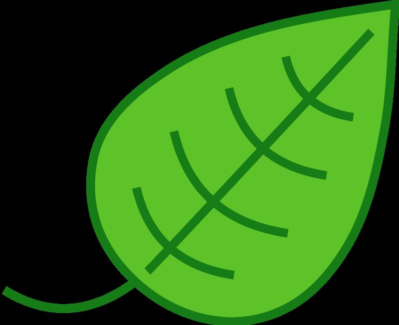 800x652 Leaf Clipart Cartoon