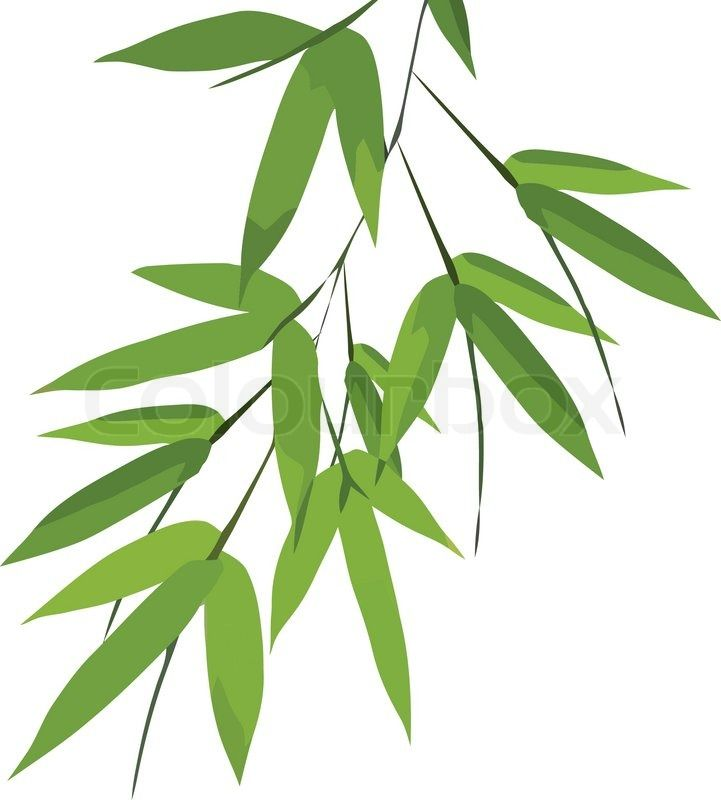 721x800 The Best Bamboo Leaves Ideas Different Types