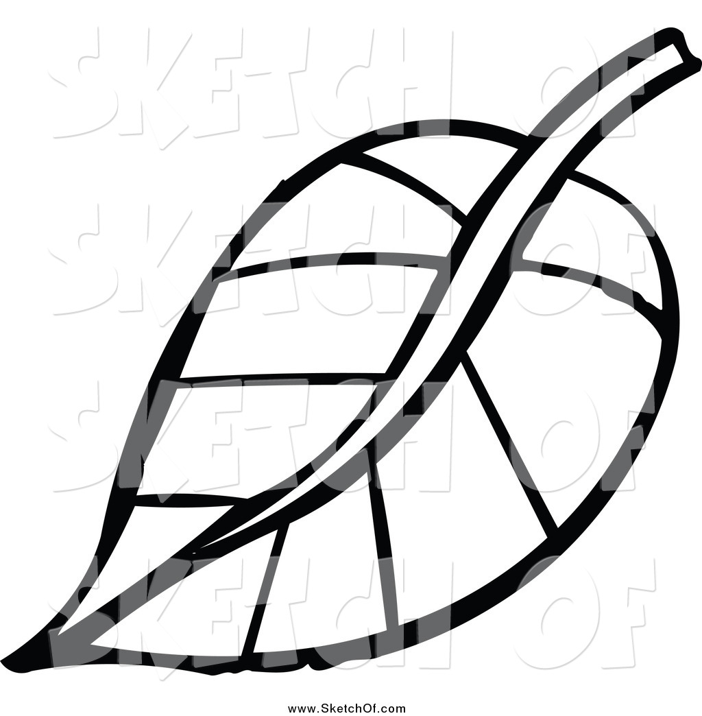 1024x1044 Drawing Of A Black And White Sketched Plant Leaf By Nl Shop