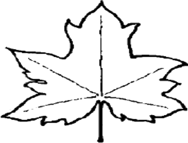 643x490 Leaf Outline Pictures Clipart Free To Use Clip Art Resource 2