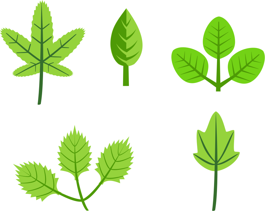900x717 Leaf Outline Clip Art