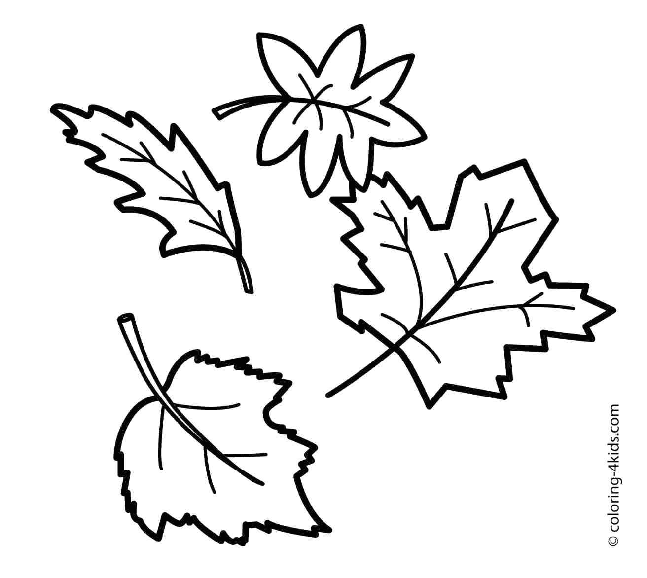 Leaf Outline Images | Free download on ClipArtMag