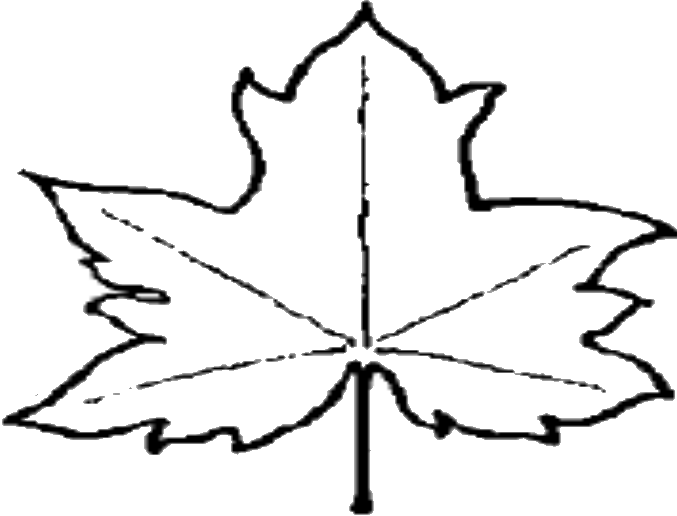 677x516 File Leaf Outline Wikipedia Clipart