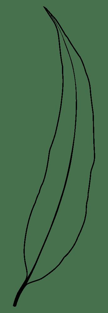 345x1000 Single Leaf Vector
