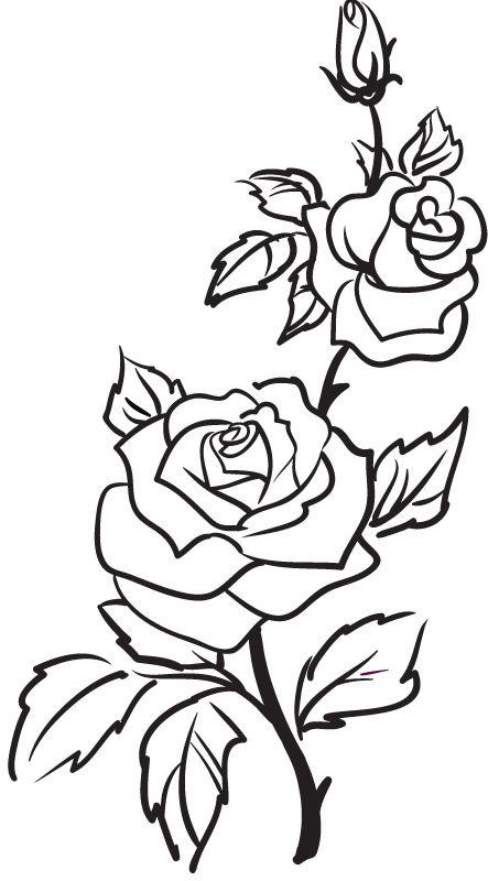 443x800 The Best Flower Outline Ideas Flower Design